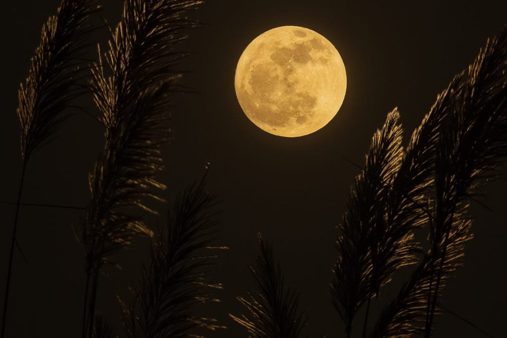 "A yellow full moon and blades of grass in a dark night, this photo is the background for listing what is covered in ""Complete Profile"" LinkedIn narratives and strategies and content writing services offered by www.10PlusProfile.com, under www.10PlusBrand.com, a branding and brand-marketing company owned by Joanne Tan, which used to be called Joanne Tan Visual Branding. The Complete Profile adds skills, all prior work experience, volunteer work, language skills, endorsements, recommendations, publications listed on LinkedIn, as well as portraits consultation, background cover photo selection, to the Bare Essentials' headline, summary, and current experience."